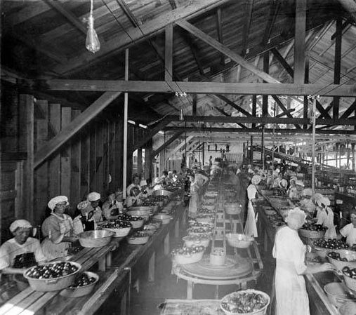Women workers at the Hinkley Beach Canning Company in Burbank, which was located west of the Southern Pacific Railroad tracks, 1919. The company was eventually sold to Libby. Burbank Historical Society. San Fernando Valley History Digital Library.