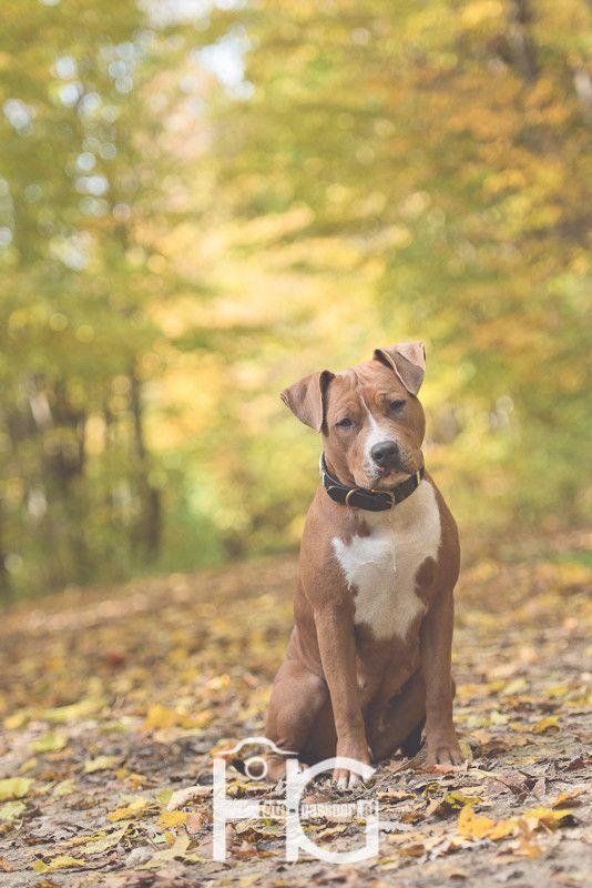 hund liegt auf dem rücken und grunzt
