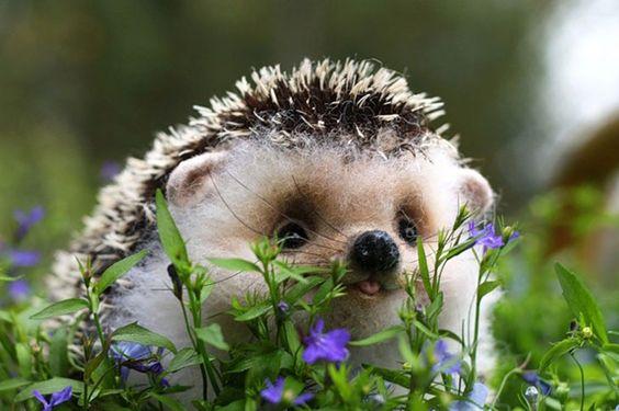 Le classement définitif des 20 animaux les plus mignons du monde - CelebrityRED