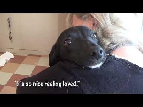 Please Adopt Cute Little Orphan Andy 1 Yr Youtube Dog