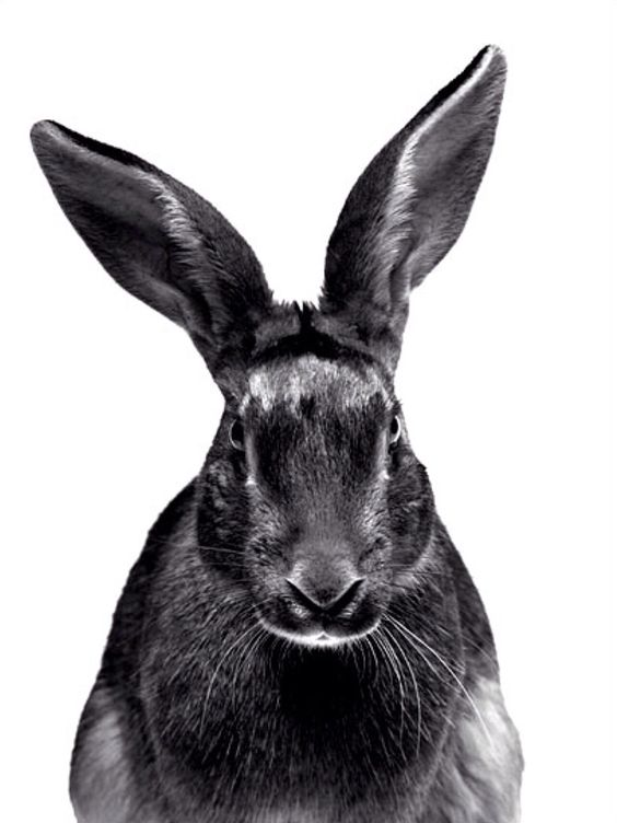 if a rabbit looked at me this way I'd run away terrified!! Walter Schels | animal portraits