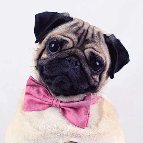 explore pug hipster hipster tumblr and more