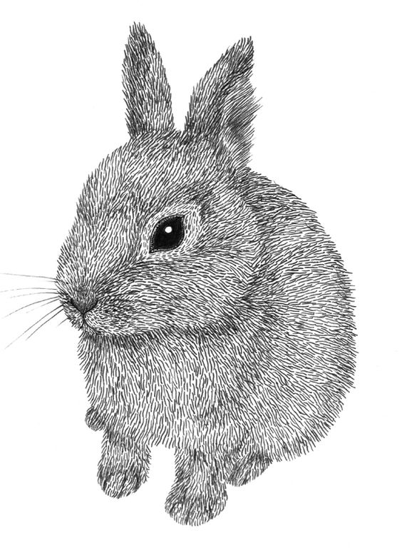 Line Drawing Bunny : Rabbit line drawings by lauren schultz inspiration