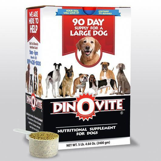 Watch Developed Homemade Dog Food Powerful Workout Tricks For