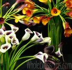 Choose your favorite fresh cut calla lily mini flowers from Whole Blossoms at excellent prices. The classic calla lily flowers are ideal for weddings, events, special occasions, and for commercial use.  For more information visit: http://www.wholeblossoms.com/mini-calla-lilies.html