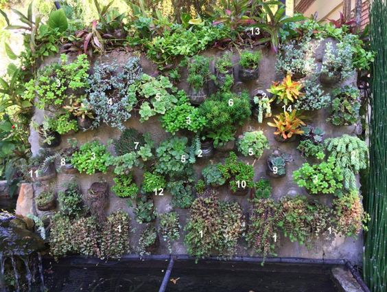 variedades suculentas muro vertical
