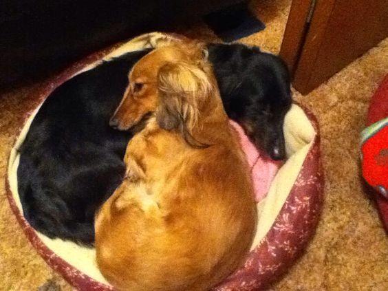 Minnie and Sassy.