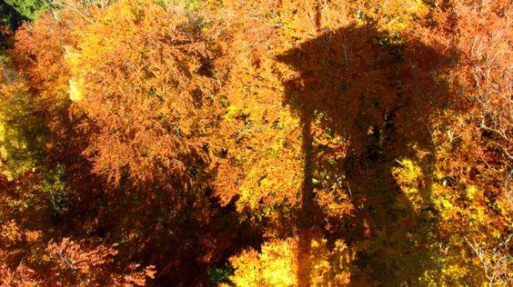 The yellow-orange foliage in autumn Ebersberg Forest
