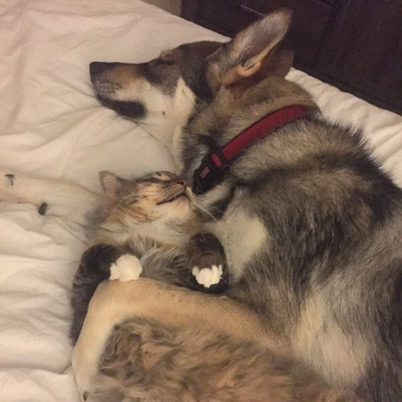 Dog Picks Out Her Own Shelter Kitten To Take Home raven-woodhouse