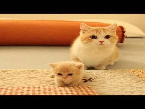 Mom Cat Talking To Her Cute Meowing Kittens Cat Mom Hugs Baby