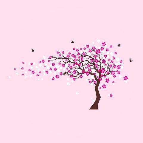 Cherry Blossum Tree Cherry Blossom Tree Tattoo Japanese Cherry Blossom Tree Seeds For Sale Blossom Tree Tattoo Cherry Blossom Tree Tattoo Blossom Trees