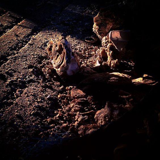 Desterro - 2014.  #desterro #floripa #florianopolis #balaiovisual #mariscos #pesca #vanessaalvesfoto #maricultura #vanessaalves #santaebelacatarina #brasil #santacatarina #brazil