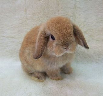 aww cute bunny