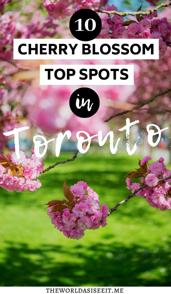 Where To Find Cherry Blossoms In Toronto The World As I See It In 2021 Toronto Travel Canada Travel Guide Canada Travel