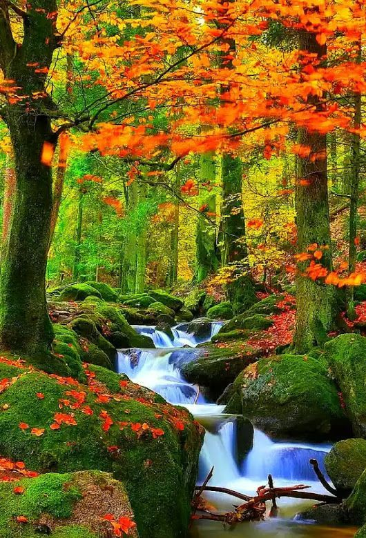 Foliage And Moss Near The Waterfall Just Gorgeous Autumn Scenery Beautiful Landscapes Nature Pictures