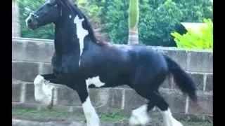 caballo de la sabana - YouTube