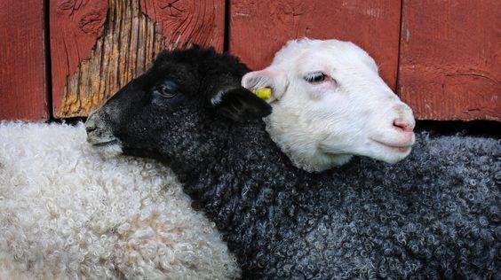 """""""Heraus zum Kampftag der Arbeiterklasse!"""" gellte es nur halblaut durch die Straßen. Das digitale Prekariat wundert sich über seine schwarzen Schafe. Deren in der Wolle weißen Brüder und Schwestern erfahren ihre ganz eigene Reinwaschung, bemerkt Hal Faber."""
