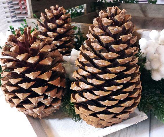 20 große Tannenzapfen Maritima Kiefernzapfen Pinienzapfen Weihnachten 14-18cm