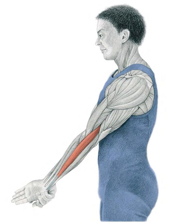 29. Hand Pronation With Extended Elbow
