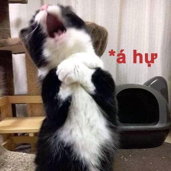 Đâm vào tim em rồi. (Ảnh: Internet) | Cute kittens, Funny kittens, Ảnh mèo  hài hước