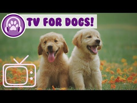 Tv For Dogs Virtual Tv To Entertain Your Bored Dog Relaxing