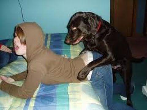 Webcam Dog