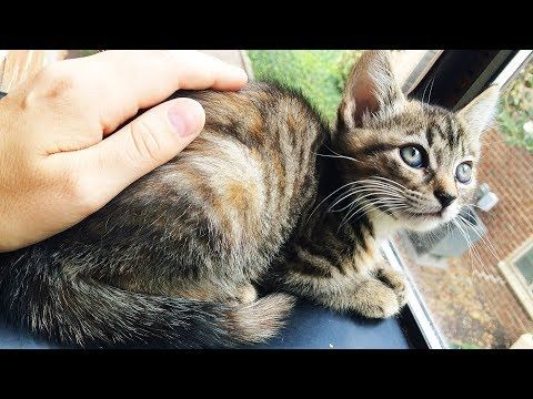 Here S The Best Approach For Turning A Scared Undersocialized Kitten Into A Friendly Adoption Ready Lovebug Step By Step Hel Baby Cats Kittens Feral Kittens