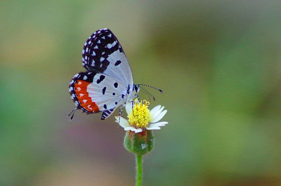 Red Pierrot ! by Darshan Trivedi (India) - Photo 143475919 - 500px
