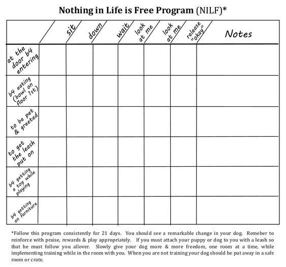 Dog Obedience Report Cards Google Search Kids Worksheets Printables Dog Training Kindergarten Worksheets