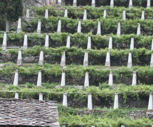 Valle #d'Aosta: #Testo #unico del vino  piena soddisfazione delle organizzazioni della filiera... (link: http://ift.tt/2dmDPTZ )