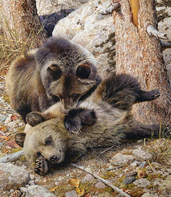 Carl Brenders Rough and Tumble Grizzly Bears