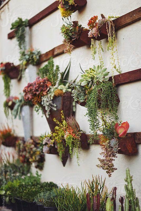 Jardim vertical: veja boas ideias