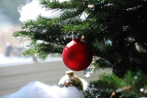 christmas indoor 3