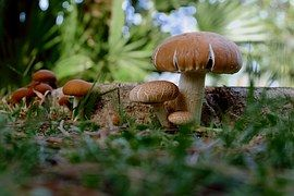 Mushrooms, Brown, White, Forest Floor
