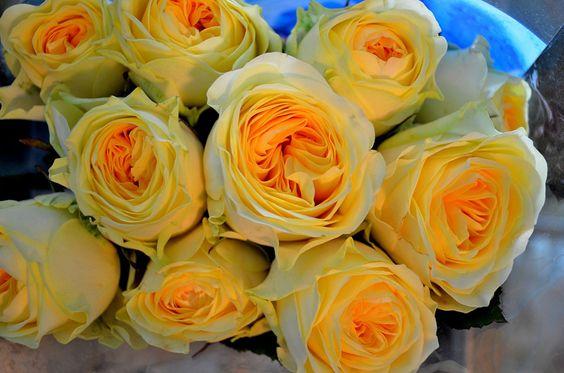 new+david+austin+roses+for+2014 | David Austin Roses Smell So Sweet!
