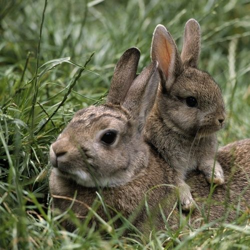 ** Mama Bunny & Her Sweet Baby