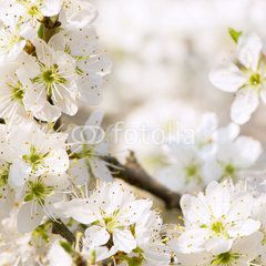 Blütenpracht im Frühling, Frühlingserwachen