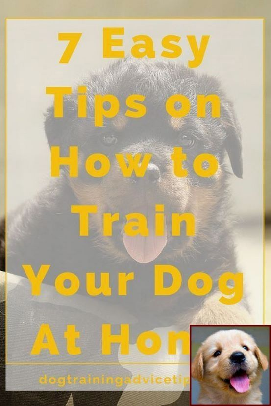 House Training A Puppy And Water And Dog Training Classes Quincy