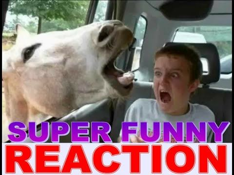 Funny videos 2016 funny vines try not to laugh challenge