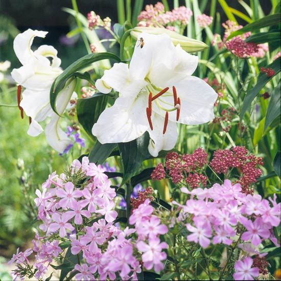 Best Fragrant Flowers For The Northwest