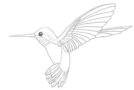 Line Drawing Hummingbird : Hummingbird drawing in pencil pinterest