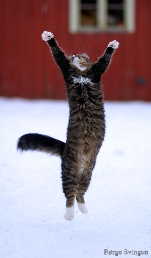 Jumping cat by Børge Svingen on 500px