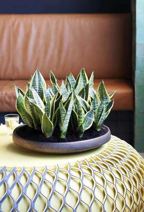 Plantas De Sombra Conheca 17 Plantas Ornamentais E Dicas De Como