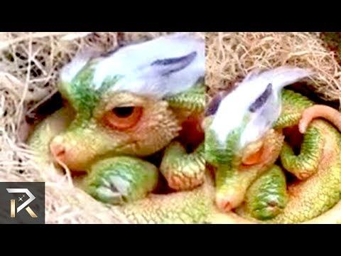 10 Rarest Strange Creatures Caught On Camera And Spotted In Real Life Youtube Mythical Creatures Weird Creatures Creatures
