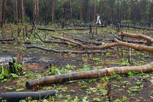 CARLOS  -  Professor  de  Geografia: Crônica da destruição do cerrado