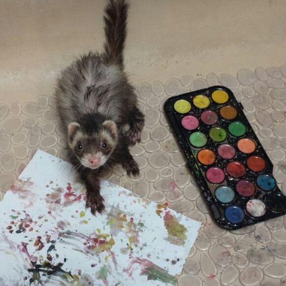Ferret art by bandit <3