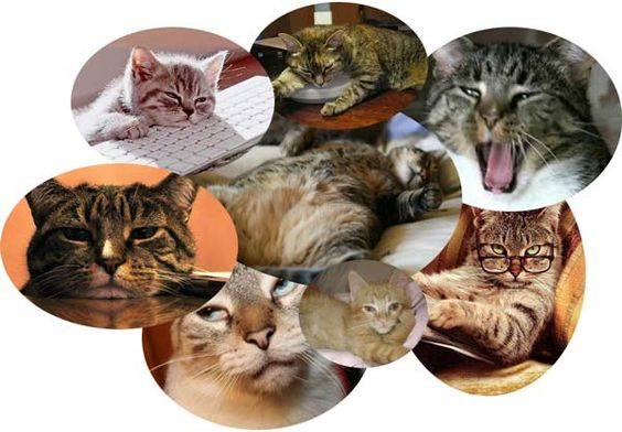 """50 Mousebreath Readers Will Win """"End Cat Boredom"""" Kits containing treats 'n' toys."""