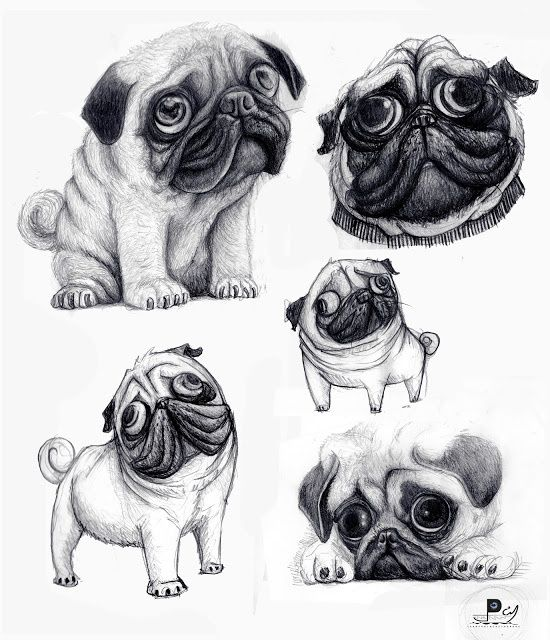 Pin By Andrea On I Love This Cute Pugs Pugs Real Dog