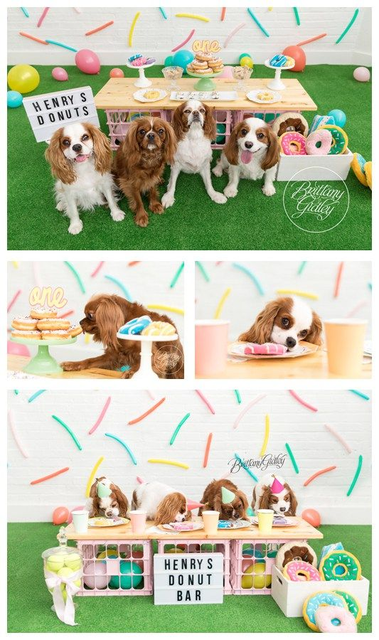 Doggy Donut Dream Session Dog Themed Parties First Birthday