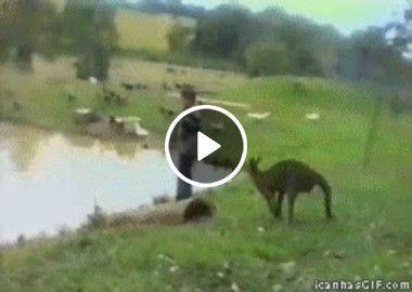 Canguru joga turista no poço na australia